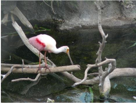 wpbird2