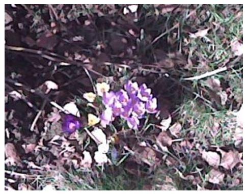 fioriacasa